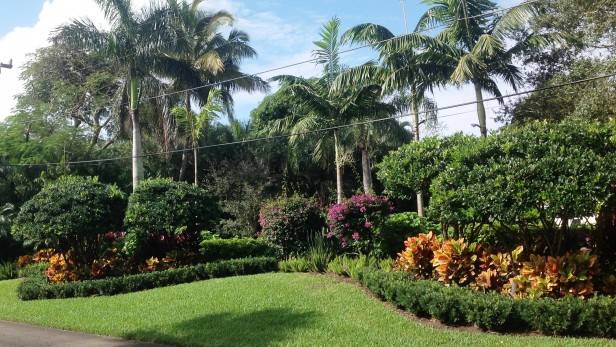 Tropical Landscaping berm for privacy.