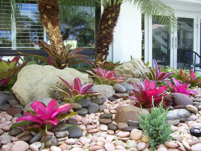 Bromeliad Design with Mexican Beach Pebbles