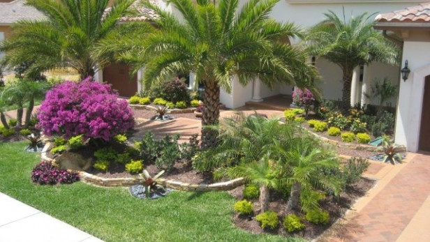 Sylvester Palm, Bouganvillea, other tropical plants and a rock wall create a fabulous tropical landscape design for this home's front yard.