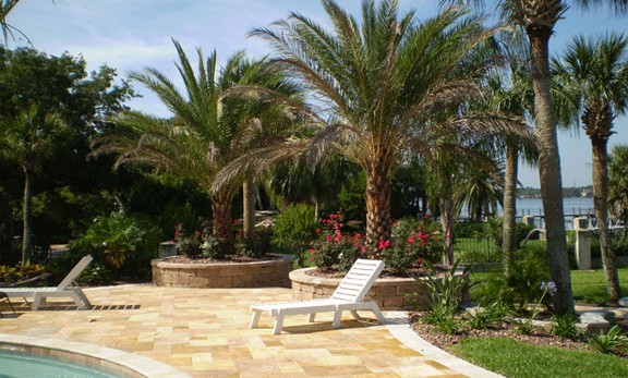 Sylvester Palms, tropical landscaping and raised beds with travertine create a stunning pool area.