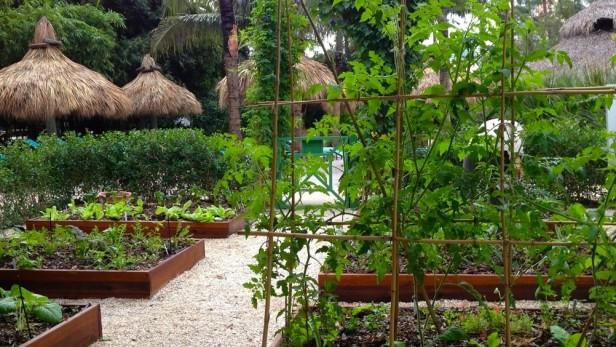 Vegetable-Gardening-Eileen-G-Designs