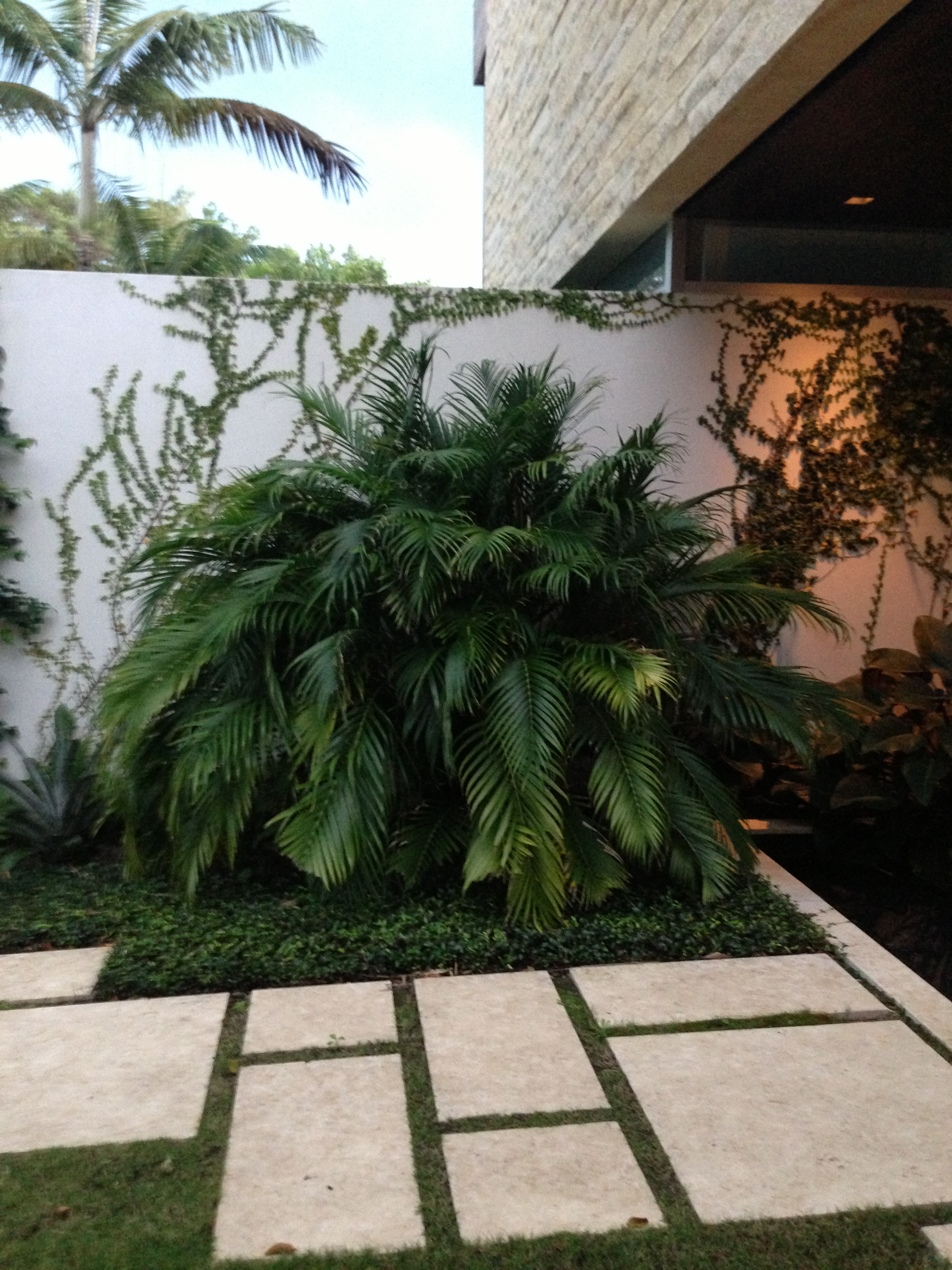 Landscape Design Front Of House Tropical