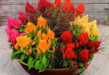 garden-tips-2